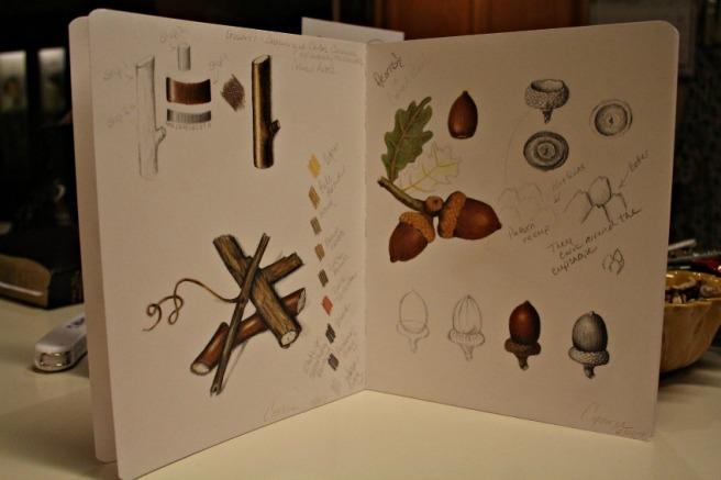 acorns4